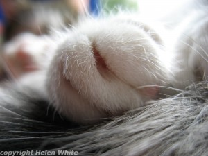 Bobby's paw copyright Helen White