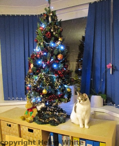 Our cat Bobby with a small fake Christmas tree